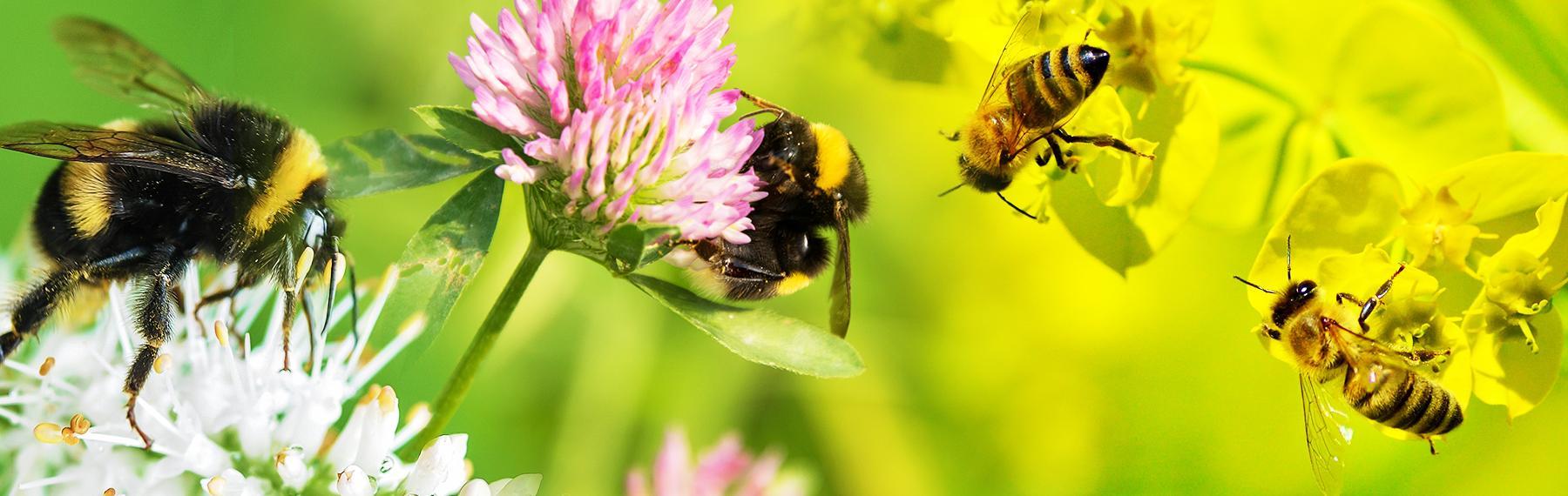 blommor för bin och humlor